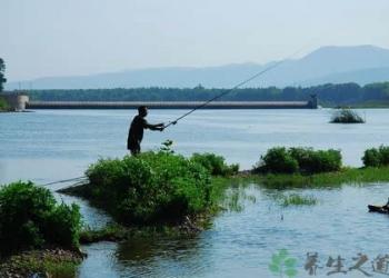 15种钓鲤鱼饵料绝密配方,教您钓鲤鱼的饵料怎么制作