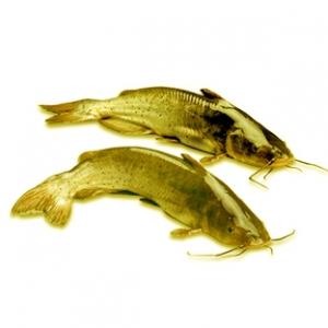 水库蚯蚓作饵夜钓黄尾和鲶鱼如何钓的多