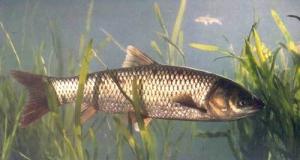 水库海竿夜钓大草鱼的必威体育直播客户端下载和方法